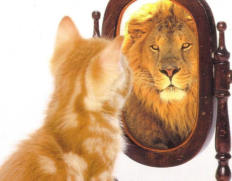 gatto-leone