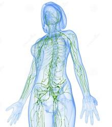 sistema-linfatico-femminile-di-vista-laterale-36217340.jpg