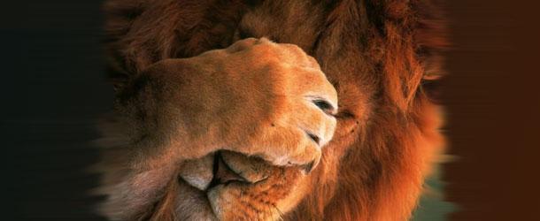 leone-timido