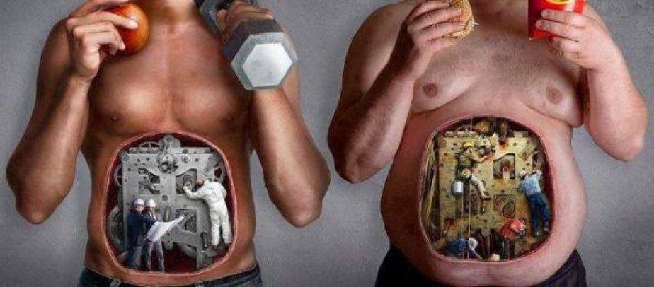 metabolismo12