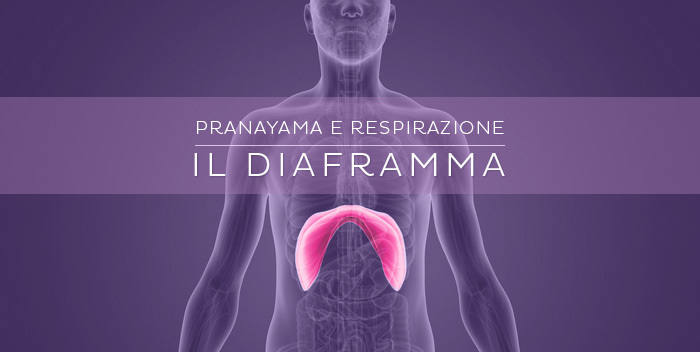 il-diaframma-e-la-respirazione-700x352