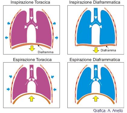 respirazione_toracica_e_diaframmatica